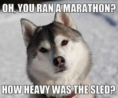 Siberian Husky questions your marathon